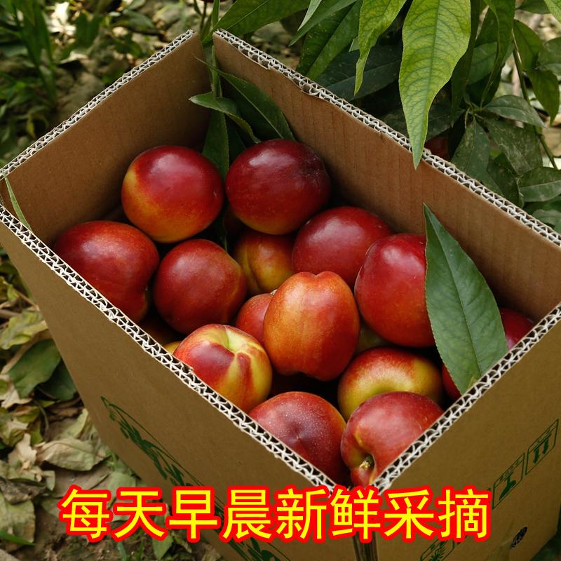 脆甜黄心油桃整箱5斤 券后16.8元包邮