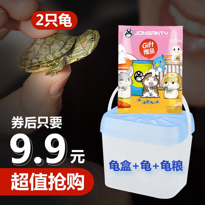 2只巴西龟+龟盒+30g龟粮【第一款】 券后9.9元包邮