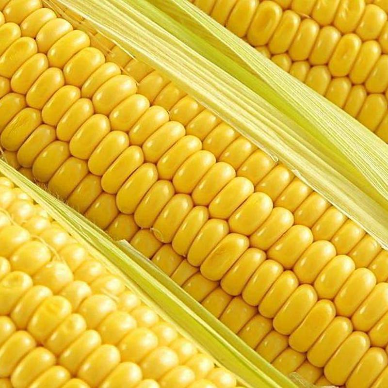 四川特产新鲜水果玉米9斤,券后17.9元包邮