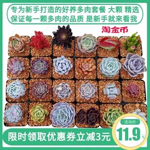 新款多肉植物套餐组合盆栽新手好养超萌肉肉花卉绿植促销1件包邮