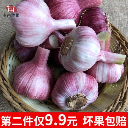 现挖新鲜紫皮大蒜5斤 16.9元包邮(第二件9.9元)