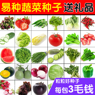 30个品种蔬菜种子套餐花卉种子盆栽